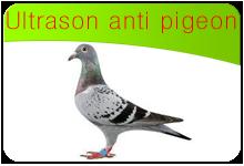 ultrason anti pigeon infos utiles sur les pigeons et solutions contre les pigeons. Black Bedroom Furniture Sets. Home Design Ideas