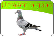 ultrason pigeon infos utiles sur les pigeons et solutions contre les pigeons. Black Bedroom Furniture Sets. Home Design Ideas